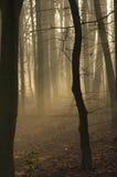 1 silhouetted trees Royaltyfri Foto