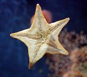1 sjöstjärna arkivfoton