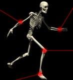 1 skelett Fotografering för Bildbyråer