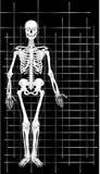 1 skelett för affärskort vektor illustrationer