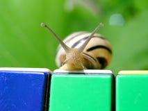 1 snail fotografering för bildbyråer