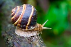 1 snail Royaltyfri Fotografi