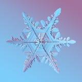 1 snowflake Arkivbilder