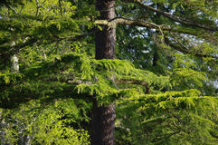 1 spektakularne natury Fotografia Stock