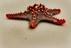1 stjärna för rött hav Royaltyfri Bild
