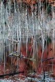 1 swamp Arkivbild