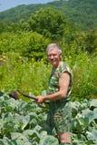 1 trädgårdsmästarehoe Arkivfoton