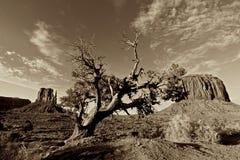 1 tree Arkivfoton