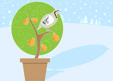 1 tree för pear 12 för juldagar partrige Arkivfoto