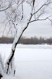 1 treevinter Royaltyfri Fotografi