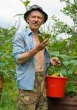 1 uomo dei cetrioli Fotografia Stock Libera da Diritti