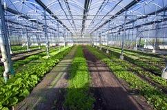 1 växthus Royaltyfria Foton