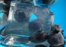 1 våta blåbär Royaltyfria Bilder