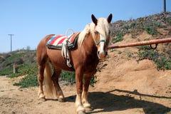 1 vaulting лошади Стоковые Изображения RF