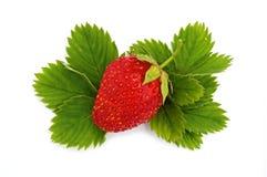 1 vert laisse des fraises Photo libre de droits
