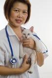 1 veterinarian котенка удерживания Стоковое Фото