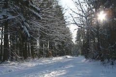 1 vinter Fotografering för Bildbyråer