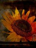 1 vykortsolros Royaltyfri Bild