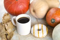 1 white Cup of coffee among pumpkins, one Donat with glaze, dry Stock Image
