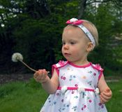 1 Year Old Girl with Dandelion. This cute little 1 year old girl is looking at a dandelion seed head she's never seen before Royalty Free Stock Images