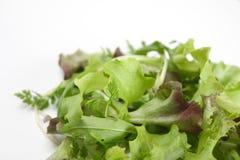 1 zieloną sałatkę Zdjęcie Royalty Free
