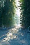 1 zimy leśna Obrazy Stock