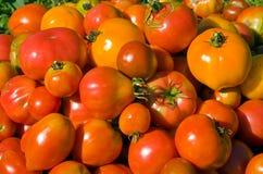 10个堆蕃茄 库存图片