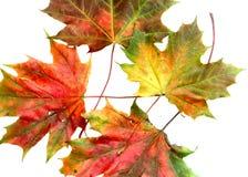 10个秋天颜色 库存图片