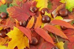 10个秋天颜色 免版税图库摄影