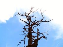 10停止的结构树 图库摄影