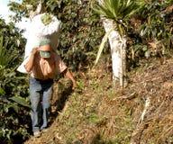 10咖啡危地马拉种植园 免版税库存照片