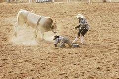 10头公牛骑马 库存图片