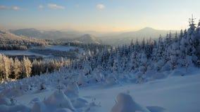 10森林没有多雪 免版税库存照片