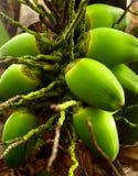 10椰子 免版税图库摄影