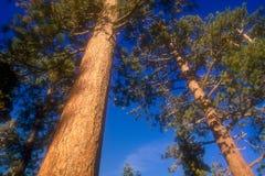 10结构树 免版税库存图片