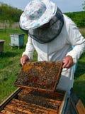 10蜂农 免版税图库摄影