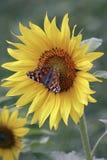 10蝴蝶 库存图片
