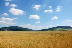 10麦地 库存图片