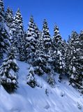 10 καλυμμένα δέντρα χιονιού Στοκ φωτογραφία με δικαίωμα ελεύθερης χρήσης