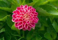 10 λουλούδια Στοκ Εικόνες