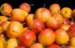 10 μήλα Στοκ Εικόνες