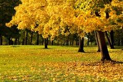 10 φύλλα φθινοπώρου Στοκ Εικόνες