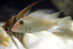 10 ψάρια ενυδρείων Στοκ φωτογραφία με δικαίωμα ελεύθερης χρήσης