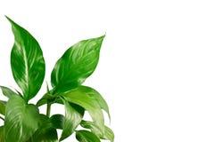 10 зеленых листьев Стоковые Изображения