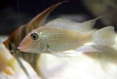 10 рыб аквариума Стоковое фото RF
