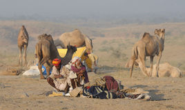 10 2009 kamel puskar ganska november Arkivbilder
