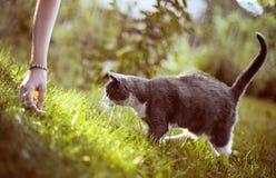 猫10 免版税图库摄影