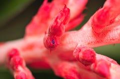 10 blommamakroserie Arkivfoton