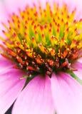 10 blommor royaltyfri bild
