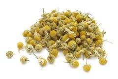 10 chamomile Στοκ φωτογραφία με δικαίωμα ελεύθερης χρήσης